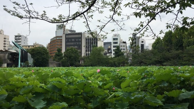 ueno shinobazu lotus