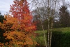 001-Jardin de mes parents en automne