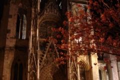 013-Cathédrale de Rouen, cerisiers de nuit