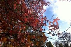 025-Feuillages d'automne