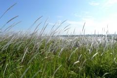 040-Herbes d'été, Kasai Rinkai