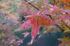 051-Feuillage d'automne, Kamakura