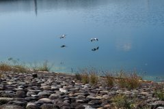 068-Lac artificiel de Sayama
