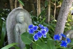 072-Statue bouddhique et hydrangea, Hasedera