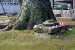 077-Sol de mousse et camélia, temple à Hakone