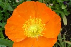Fleurs de Giverny