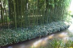 Rivière et bambous
