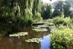 L'étang aux nénuphars