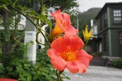 Hakodate - Nouzenkazura