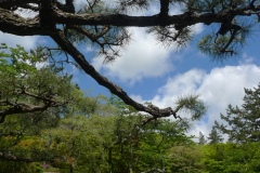 Hakone - Kowakidani