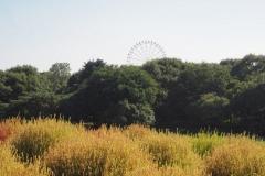 kochia hitachi