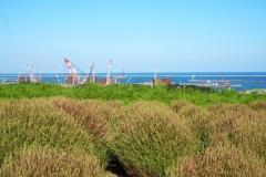 Hitachi kaihin kôen - Vers l'océan