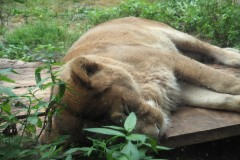 Asahikawa - Zoo d'Asahiyama