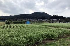 Kinchakuda