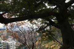Kobe - Vue depuis les hauteurs