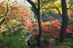 Kyu Furukawa Teien - Couleurs d'automne