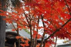 Matsumoto - Feuillage d'automne