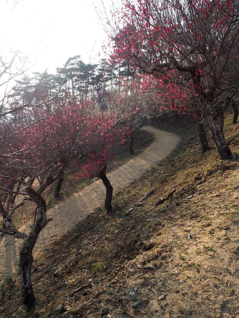 Pruniers jardins Hodosan