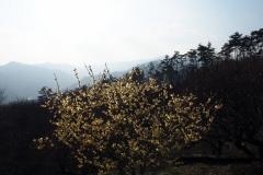 Rôbai jardins Hodosan