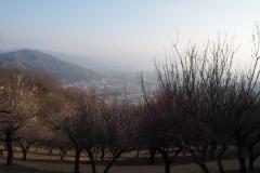 Nagatoro - jardins Hodosan