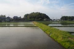 Rizières de Chiba depuis le train