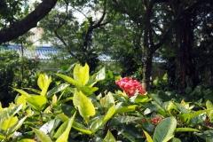 Taipei fleur