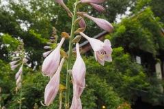 Moegi no mura - Fleurs