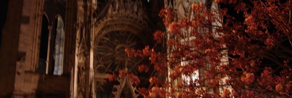 cathédrale rouen cerisiers