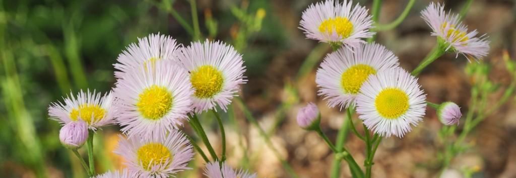 fleurs showa kinen tachikawa
