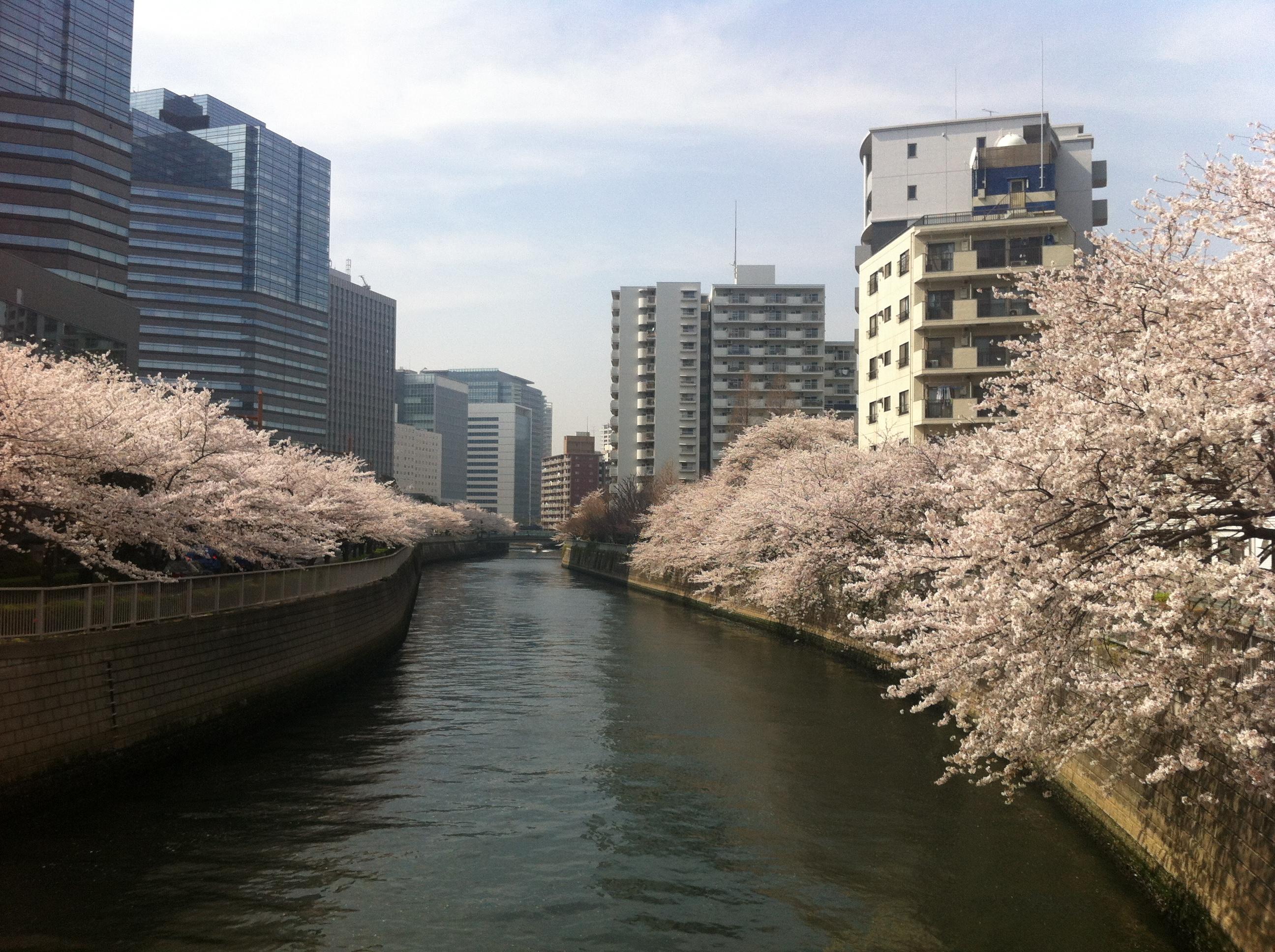 sakura tokyo meguro