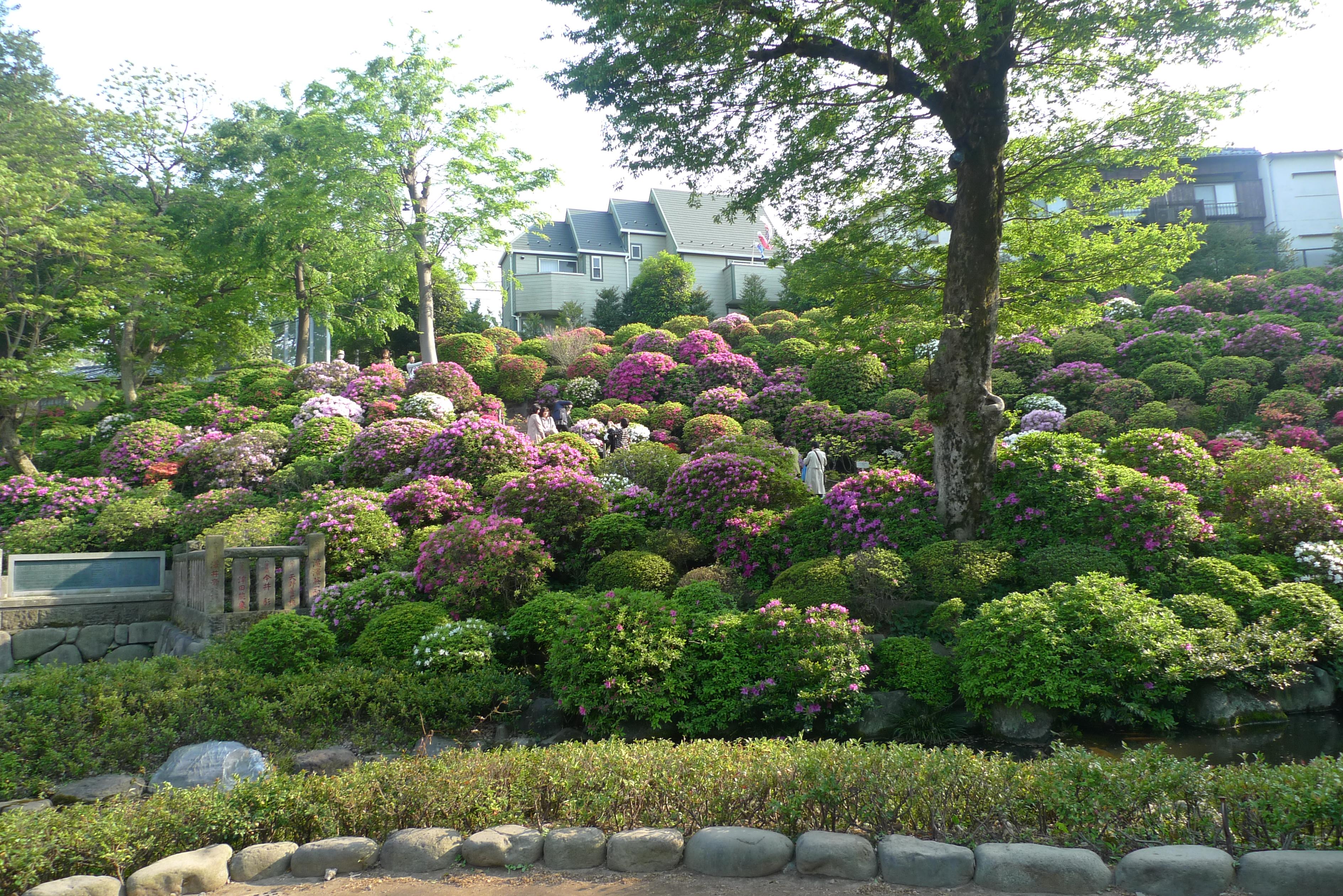 festival azalées sanctuaire nezu tokyo
