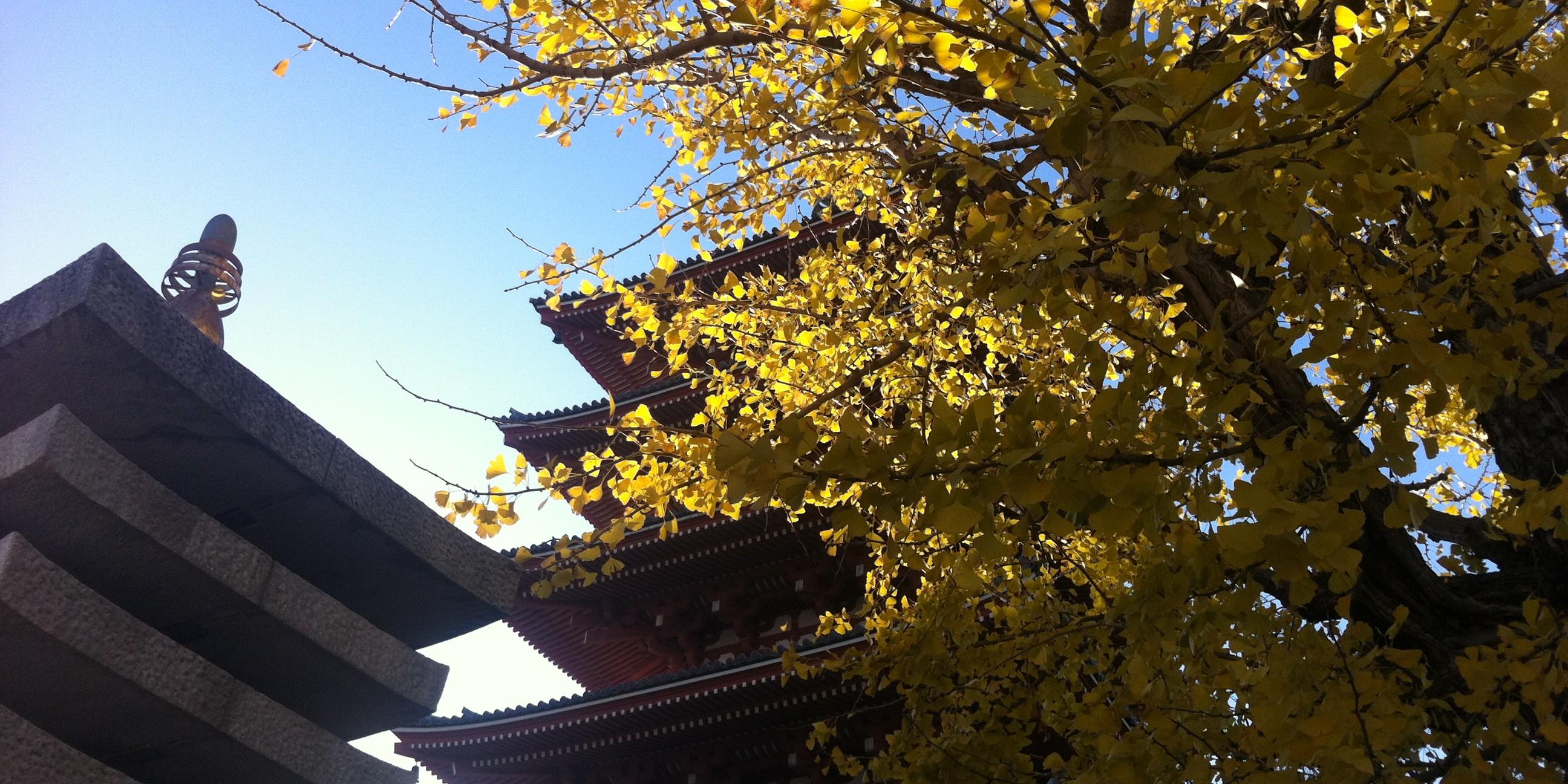 asakusa automne