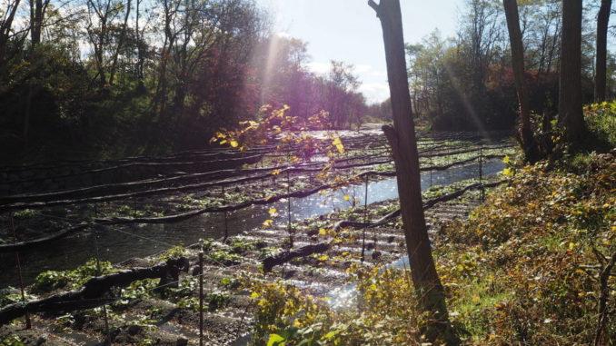 azumino wasabi farm