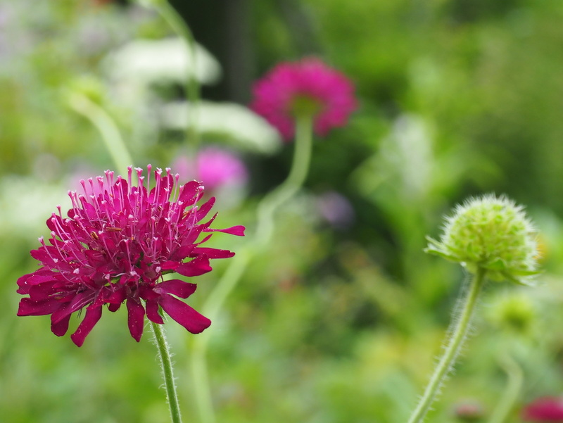 fleurs kaze no garden