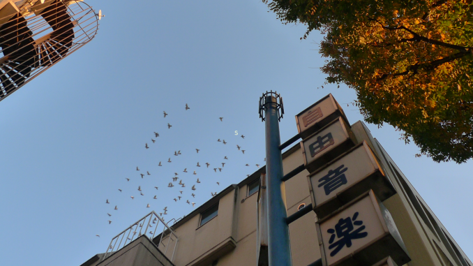 automne nakano