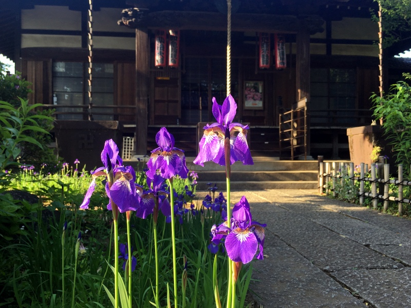 temple asagaya