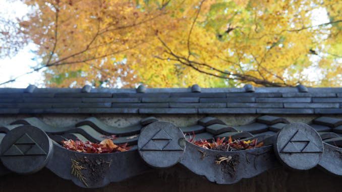 engakuji kamakura automne
