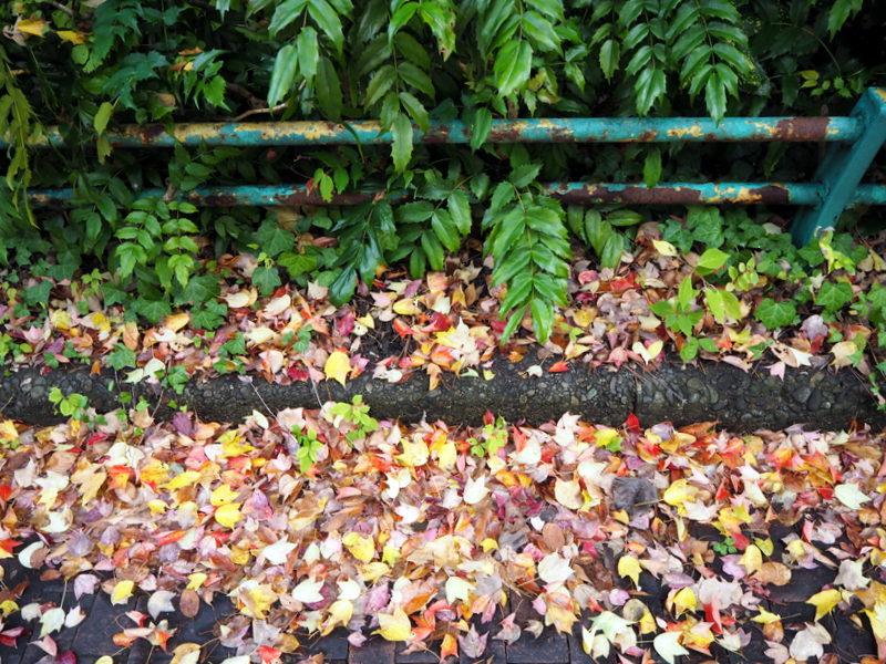 automne kanazawa