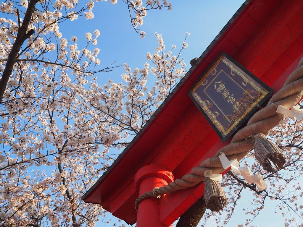 sanctuaire hachiman sado sakura