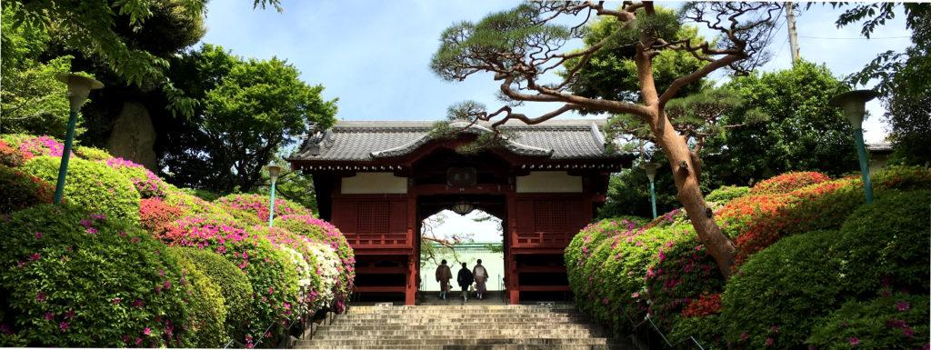 azalées gokokuji