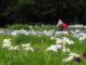 iris garden yokosuka